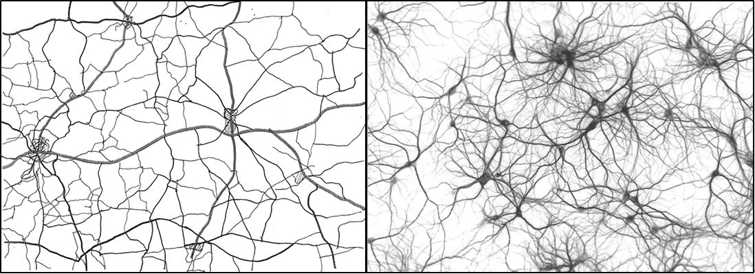 Connections between villages in rural Suffolk; and between neurons in the human brain. Images courtesey of Alan Baxter.