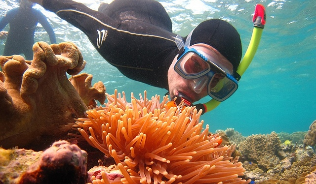 Amid fears of irreversible coral bleaching, an increasing number of tourists want to see the Great Barrier Reef 'before it's too late'. Image: Paul Arps, Diving for Nemo (Australia 2010), licensed under Creative Commons via flickr.
